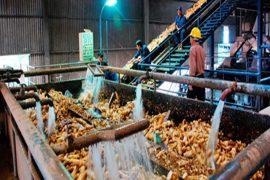 Quy trình công nghệ xử lý nước thải tinh bột sắn