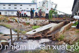 Báo động: Tình trạng ô nhiễm môi trường từ các xưởng sản xuất gỗ