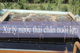 Phương pháp xử lý nước thải trang trại chăn nuôi lợn- Tân Huy Hoàng