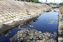 Phạt 250 triệu với hành vi xả thải độc hại trực tiếp vào nguồn nước