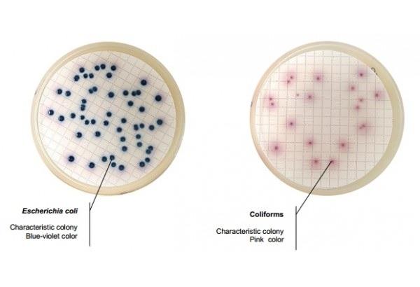 E.coli và Coliforms