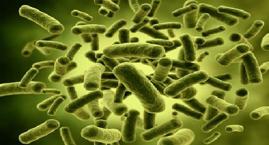 Vi khuẩn E.coli và coliform